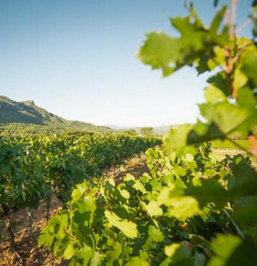 Photo de rangs de vignes